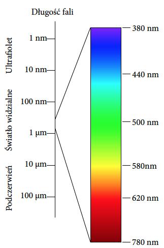 42ef9cbd9 Rysunek 4: Widmo światła widzialnego. Źródło: opracowanie na bazie wikipedii